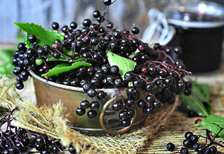 Elderberry and Elderflower
