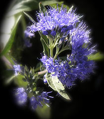 7 Easy Facts About How To Start Hyssop Seeds Shown
