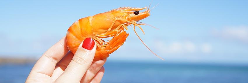 Prawns, shrimp or scampi?