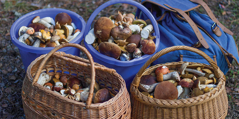 Foraging For Ingredients In Canada