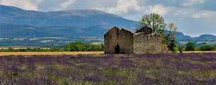 old building and lavender fields