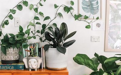 A Guide To Growing Plants Indoors To Spruce Up Your Living Space