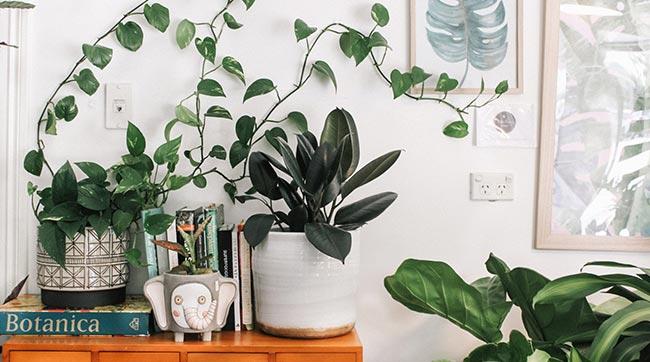 several indoor plants